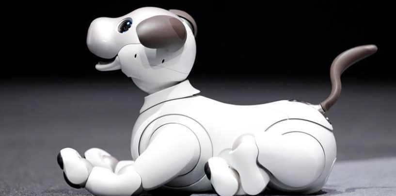 Can Robotic Pets Replace the Real Ones?