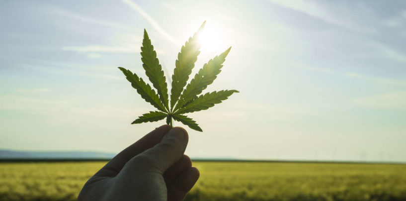 Big Data is the Driver of the Cannabis Industry
