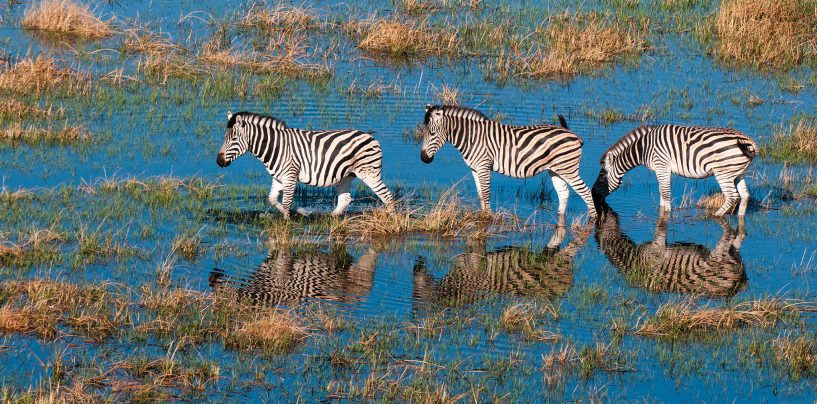 How Microsoft AI helps to save endangered species