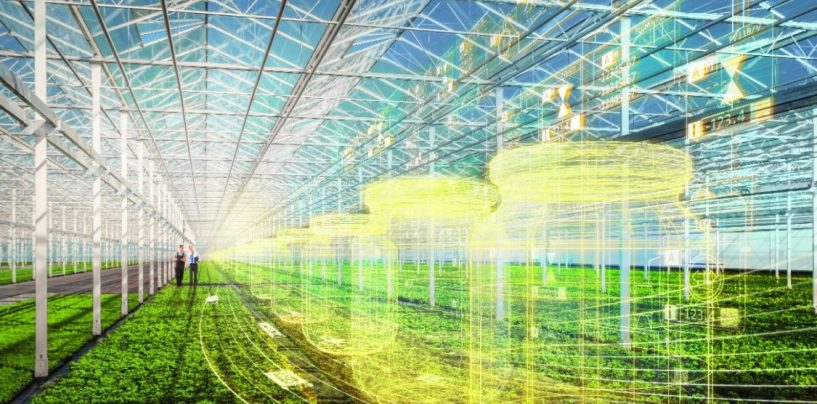 AI in Agriculture: Strengthening the Future of Farming