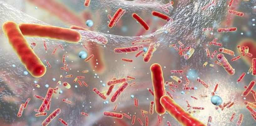 Harnessing the Power of Deep Learning for Innovative Antibiotics Drug Discovery