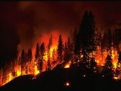 Identifying Wildfires Using Artificial Intelligence